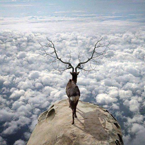 Dream interpretation of deer or being killed by a deer
