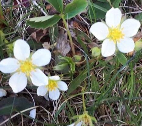 Dreams about plants flowering interpretation