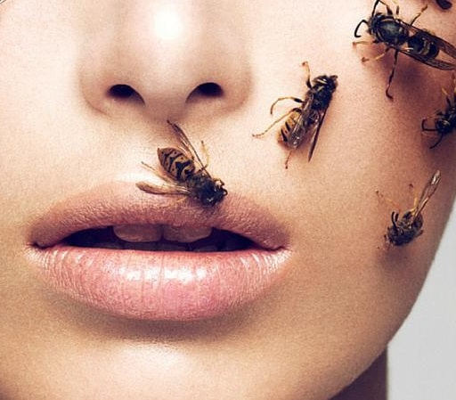 What does it mean to dream about wasps or bees